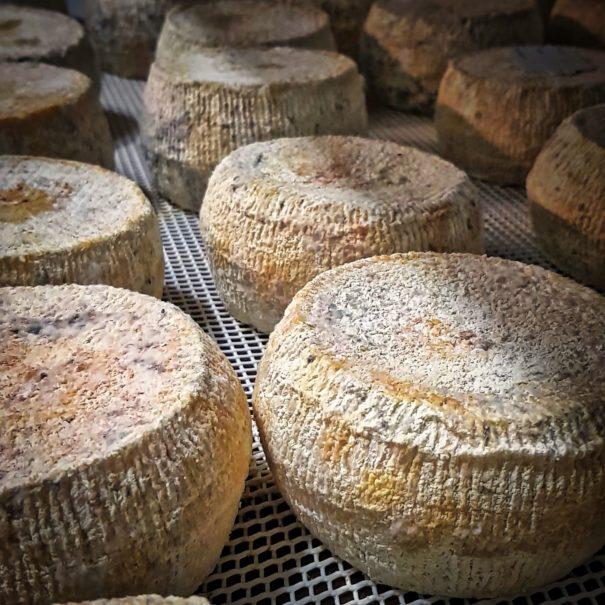 le fromage corse de la ferme
