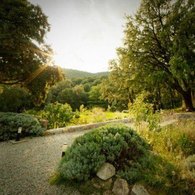 Jardin devant la Maison d'hôtes Zella en Corse